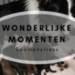 Wonderlijke momenten – Examenstress